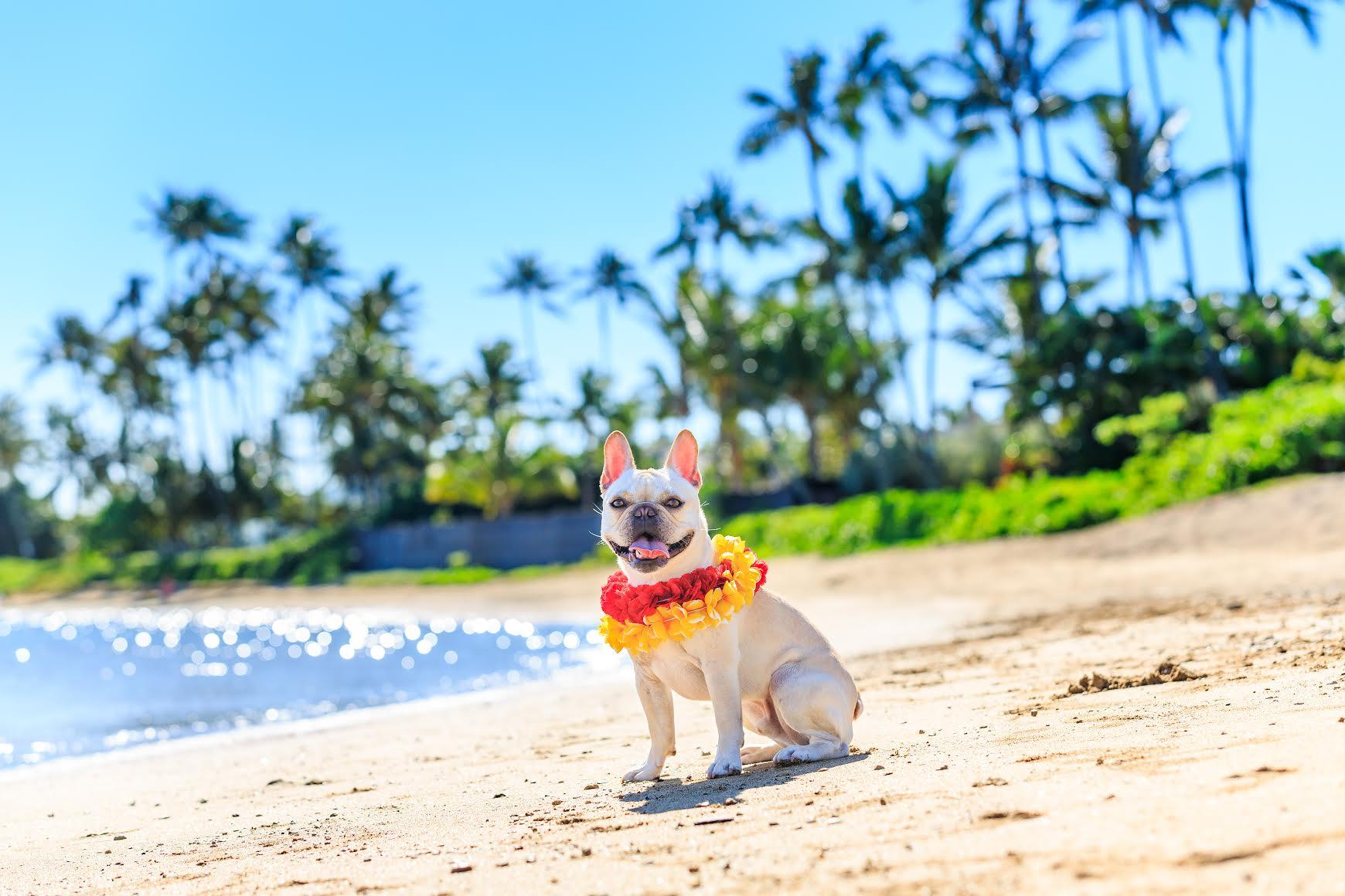 Best Dog Boarding Oahu