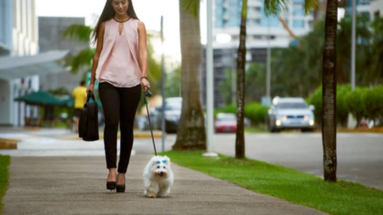 Benefits of Doggie Daycare