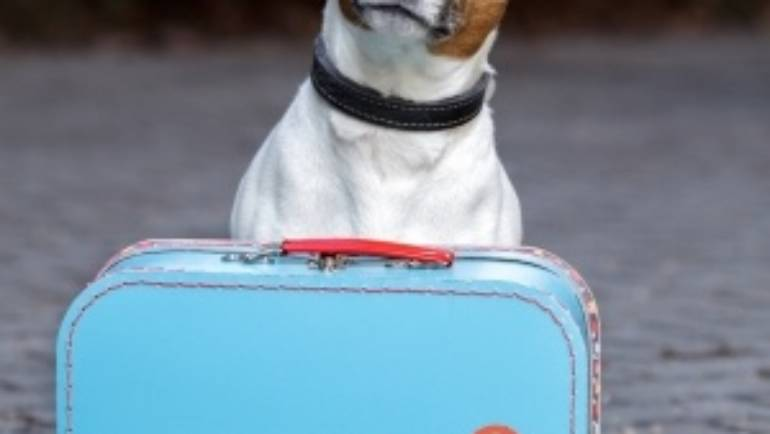 How to Prepare your Pet for Boarding