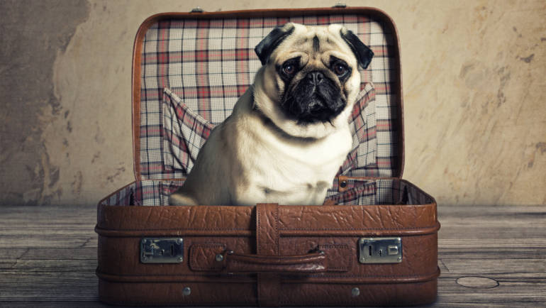Flying Your Dog To Hawaii