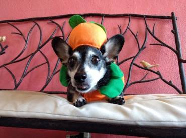 5 DIY Costumes for Your Pups, Both Large And Small