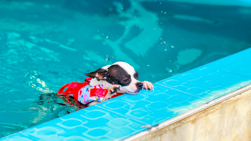 dogs swimming with life vest