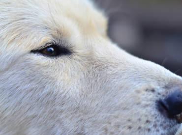 Dog Anxiety